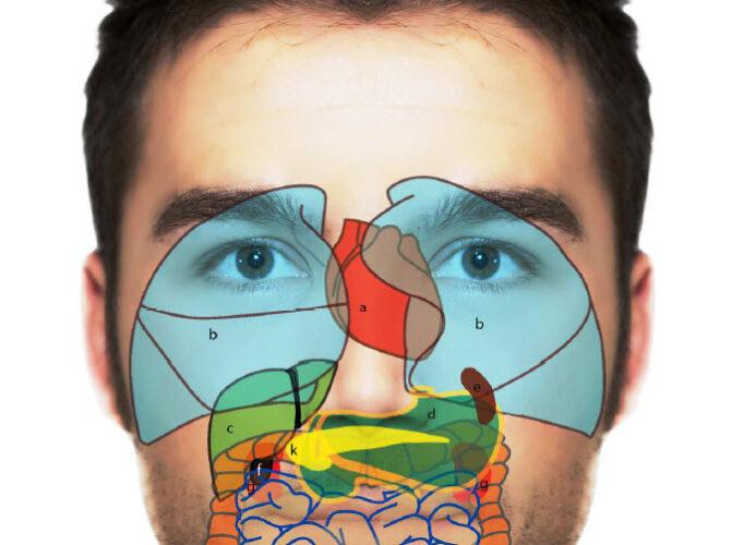 farmacia-angelini-bastia-riflessologia-facciale_4